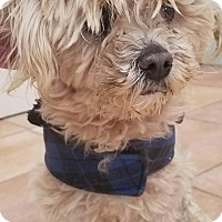 Adopt A Pet :: Marly - California City, CA