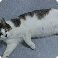 Adopt A Pet :: Elroy - Raleigh, NC