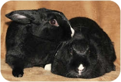 Other/Unknown Mix for adoption in Los Angeles, California - Star Sisters