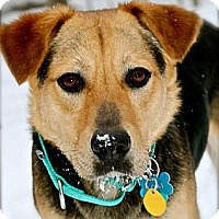 Adopt A Pet :: Mason - Hastings, NY