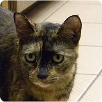 Adopt A Pet :: Holly - Naples, FL