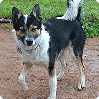 Adopt A Pet :: Hatch - Athens, GA