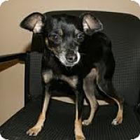 Adopt A Pet :: Tia - Conway, AR