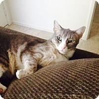 Adopt A Pet :: Precious - Sacramento, CA