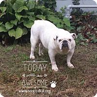 Adopt A Pet :: Sophie Mackanaw - Chicago, IL