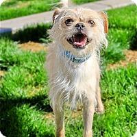 Adopt A Pet :: Trooper - Scottsdale, AZ