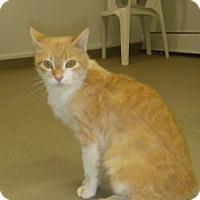 Adopt A Pet :: Belle - Hamburg, NY