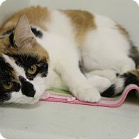 Adopt A Pet :: Lorelei - Medina, OH