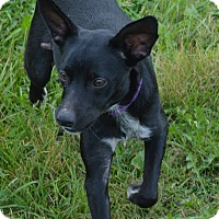 Adopt A Pet :: Callie - Prole, IA