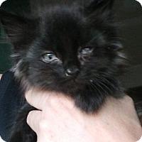 Adopt A Pet :: Lucky - Levelland, TX
