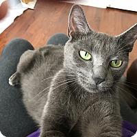 Adopt A Pet :: Ashley - Island Park, NY