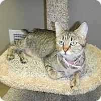 Adopt A Pet :: Faithful - Creston, BC