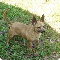 Adopt A Pet :: Hobbs - Ormond Beach, FL