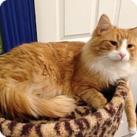 Adopt A Pet :: Clancy - Oyster Bay, NY