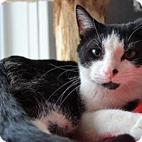 Adopt A Pet :: Rubet - Michigan City, IN