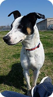 Hound (Unknown Type) Mix Dog for adoption in Cleveland, Mississippi - GRETEL