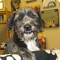 Adopt A Pet :: Jill - Groton, MA