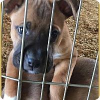Adopt A Pet :: Brutus - DeForest, WI