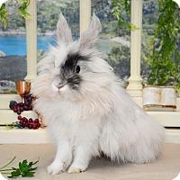 Adopt A Pet :: Aurora - Chicago, IL