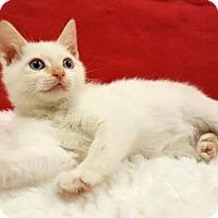 Adopt A Pet :: Smores - Modesto, CA