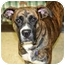 Photo 1 - Boxer Mix Dog for adoption in Racine, Wisconsin - Justin