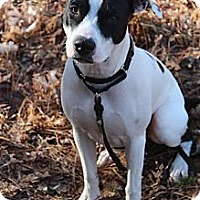 Adopt A Pet :: Daisy - Ellijay, GA