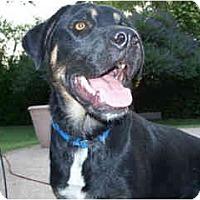 Adopt A Pet :: Udon - Scottsdale, AZ