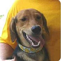 Adopt A Pet :: Babs - Kingwood, TX