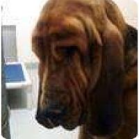 Adopt A Pet :: Harold - Georgetown, KY