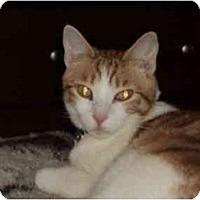 Adopt A Pet :: Squiggy - Morgan Hill, CA