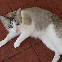 Adopt A Pet :: Lola - Woodland Hills, CA