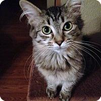 Adopt A Pet :: Sophie - Scottsdale, AZ