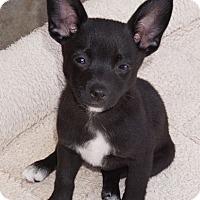Adopt A Pet :: Keeley - La Habra Heights, CA