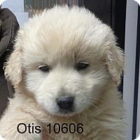 Adopt A Pet :: Otis - Greencastle, NC