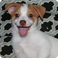 Adopt A Pet :: WYATT - Mission Viejo, CA