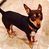 Adopt A Pet :: Daisy - Beavercreek, OH