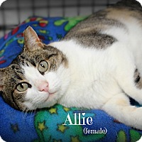 Adopt A Pet :: Allie - Glen Mills, PA