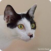 Adopt A Pet :: Leia - Homewood, AL