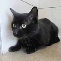 Adopt A Pet :: Hawthorne  $25 to adopt - North Richland Hills, TX