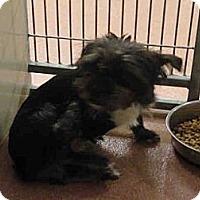 Adopt A Pet :: PIXIE - Ogden, UT