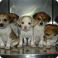 Adopt A Pet :: Elaine - Stilwell, OK