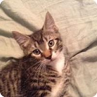 Adopt A Pet :: Jimmy - Riverside, RI