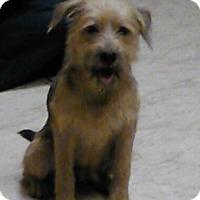 Adopt A Pet :: Benji - Somers, CT