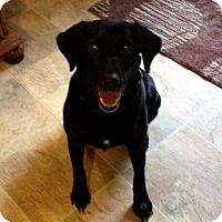 Adopt A Pet :: Hallie - Knoxville, TN
