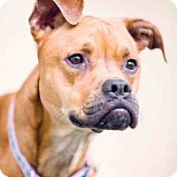 Adopt A Pet :: Pretty Girl - Youngstown, OH