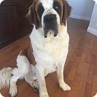 Adopt A Pet :: Daryl - Bellflower, CA