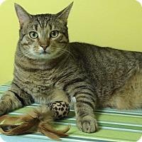 Adopt A Pet :: Iggy - Medway, MA