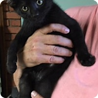 Adopt A Pet :: Moonshadow - Troy, OH