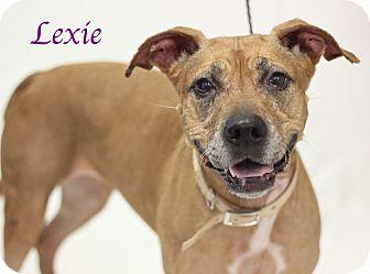 Mixed Breed (Medium) Mix Dog for adoption in Bradenton, Florida - Lexie
