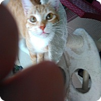 Adopt A Pet :: Punky - Laguna Woods, CA